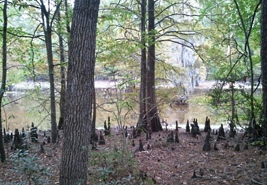 Crackerneck Wildlife Management Area in Aiken County offers many picturesque locations for hunters and other recreation enthusiasts to visit when it opens Saturdays during September and on Oct. 1.