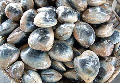 Clam season to close May 31