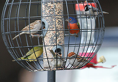 Fortunately Bird Feeder Care Is Easy Just Follow These Guidelines Keep Feeders Clean