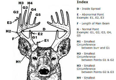 Antler scoring in south carolina
