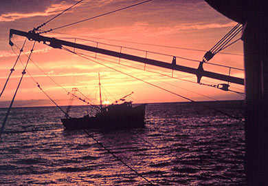 Commercial shrimp trawling season to open May 30