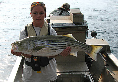 Scdnr aiken county wildlife area opens to the public for Clarks hill fishing report