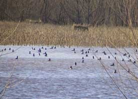 Waterfowl Management Areas