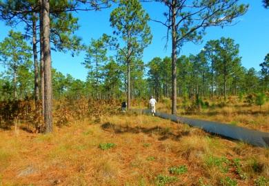 Hábitat en la propiedad con Pino de Hoja Larga el cual favorece a la Tortuga de la Florida (y a muchas otras especies).