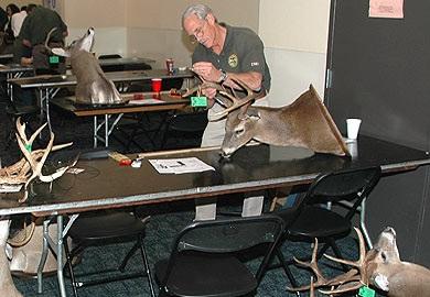 Measuring Deer Antlers