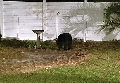 A bear in one of South Carolina's northern coastal counties raids a homeowner's bird feeder.