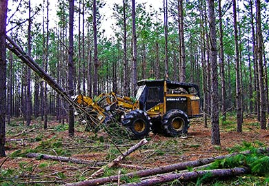Landowners participating in the program will be paid $150 per acre on top of CRP payments and revenue from timber harvests.