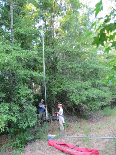 Setting up mist nets on a pulley system to capture bats.