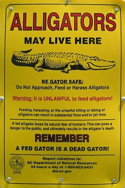 Alligator warning signs such as this one are a common sight around freshwater access points and ponds in the South Carolina coastal plain and should always be heeded.