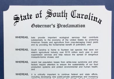 Governor's office recognizes Bat Week in South Carolina