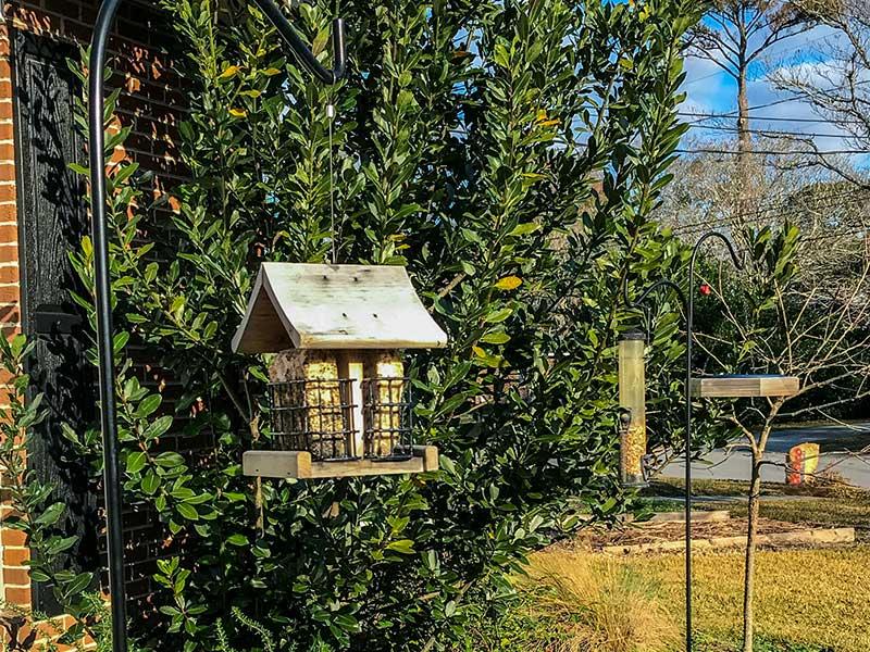 Foto por: los alimentadores para aves