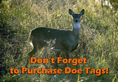 Don't Forget to Purchase Doe Tags!