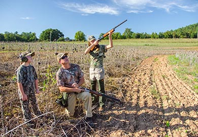 South Carolina mourning dove season to open September 2