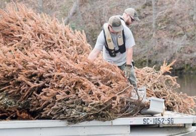 Los árboles de Navidad que son desechados se utilizan como atractores de peces en las represas de Carolina del Sur.