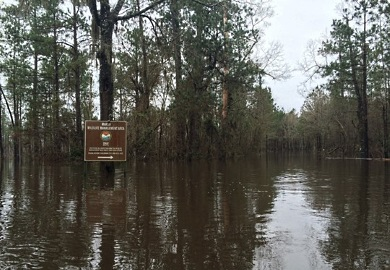 Marsh WMA experiencing moderate flooding (SCDNR photo)