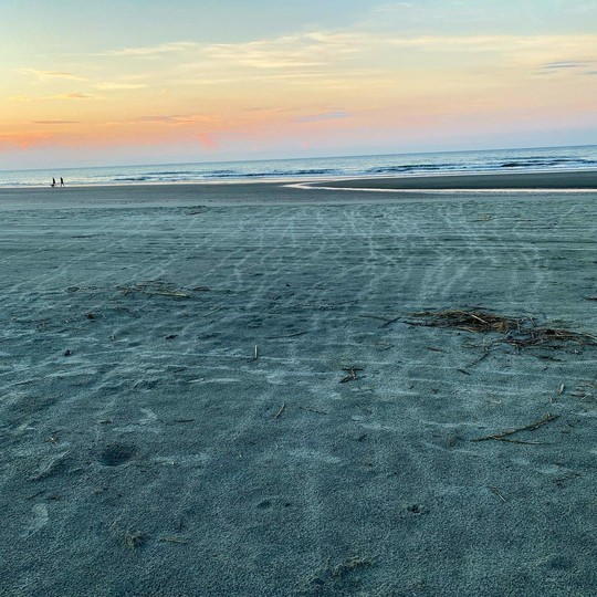 The tracks left by dozens of sea turtle hatchlings are visible in this early morning shot shared by the Town of Kiawah