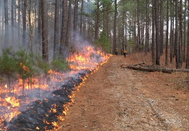 SCDNR fire crews conduct a prescribed burn at Liberty Hill WMA in Feb. 2018.