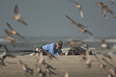 SCDNR shorebird leader named biologist of the year