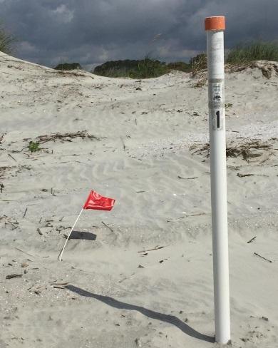 Un marcador señala la ubicación del primer nido de tortuga de 2019 en Kiawah Island – y en el estado de Carolina del Sur.