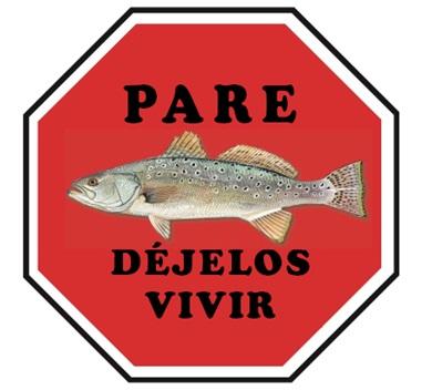 La trucha de mar moteada es la segunda especie de pez deportivo más popular en Carolina del Sur.