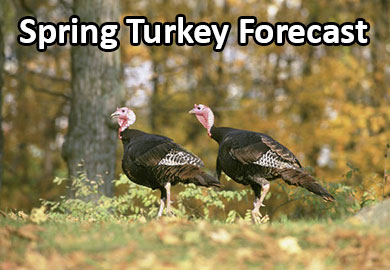 Spring Turkey Forecast