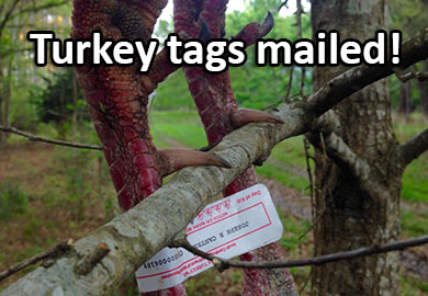 Turkey tags have been mailed for Scdnr fishing license