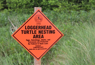 Loggerhead Turtle Nesting Area sign