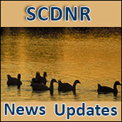 SCDNR News Updates