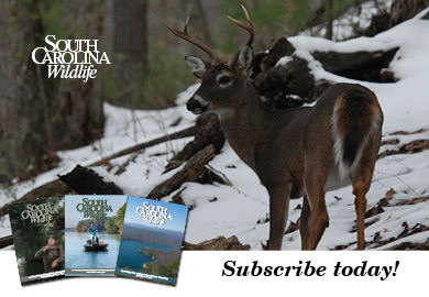 SC Wildlife magazine - Start your subscription today call 1-800-678-7227