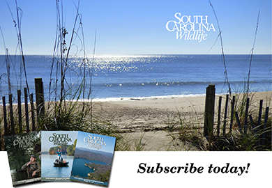 SC Wildlife magazine - Start your subscription today call 1-800-678-7227 (Hawk by Larry Druffel)