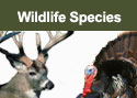 Wildlife Species Information