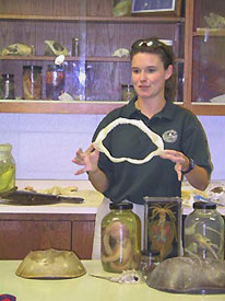 Educator showing shark jaw