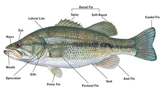 SCDNR - Fishing Information