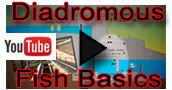 Diadromous Fish Basics