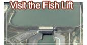 Visit the Fish Lift