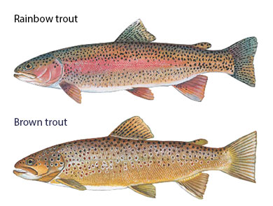 scdnr lower saluda river coldwater trout regulations public comment