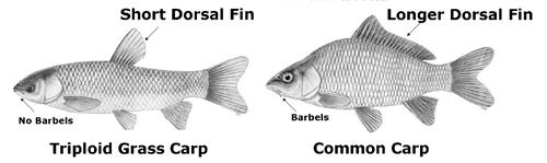 SCDNR - Aquatic Nuisance Species Program Common questions ...