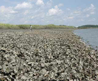 Where do oysters live?