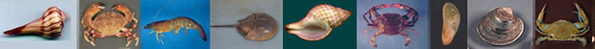 Shellfish - Crustaceans,Welks, Crabs, Horeshoe Crabs, etc.