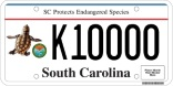 Sea Turtle License Plate - Photo by Barbara Bergwerf