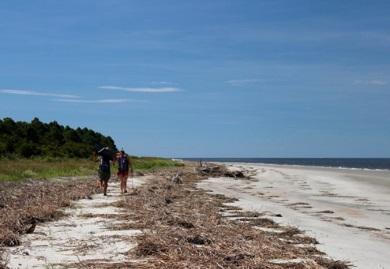 Biólogos del SCDNR recorren las tres millas de Otter Island semanalmente durante el verano, para realizar conteos y proteger nidos de tortugas marinas (Foto por Erin Weeks)