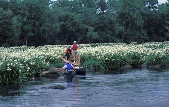 Scdnr scenic rivers for Catawba river fishing