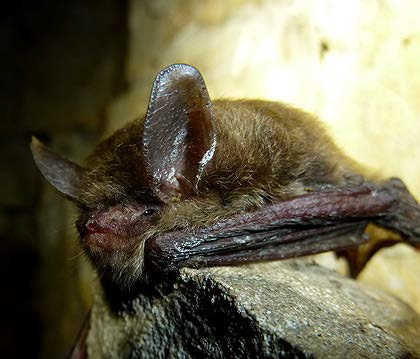 scdnr bats