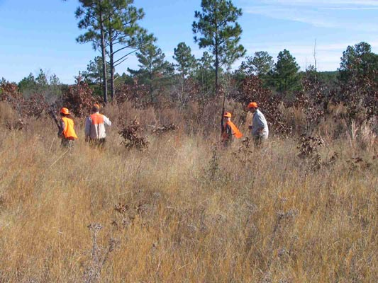 Scdnr everything quail for Sc dnr fishing license