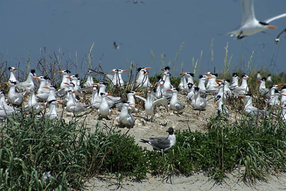 Coastal Birds In South Carolina